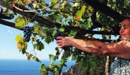 Cantine Iovine dal 1890, selezionata per il Stabia Wine Event