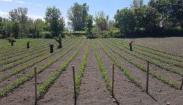 Patrimonio agricolo vesuviano a Treviso con Gourmandia